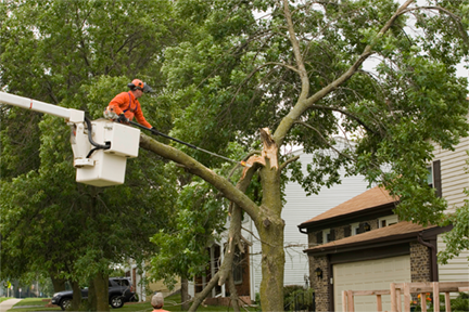 Aerial Tree Work Wright Hennepin Electric