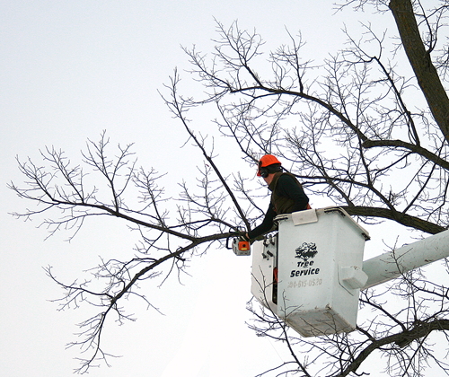 Winter is the perfect time to have your trees trimmed, as there is a reduced chace of spreading diseases.